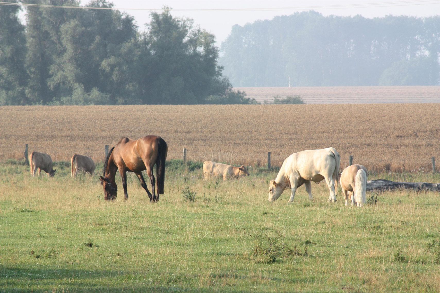 Trebeltal Bioprodukte Logo Bio Fleisch Rinder Pustertaler Sprinzen Gelbvieh Rohlfing Kuh Mecklenburg Vorpommern Christian Landwirtschaft